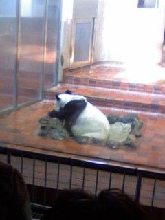 上野動物園名物。